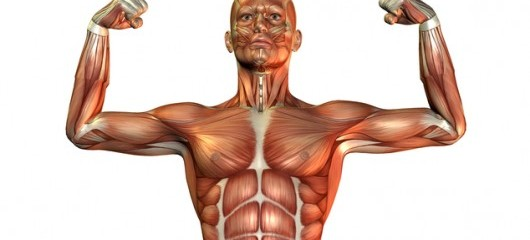 Creating An Anabolic State That Supports Muscle Growth