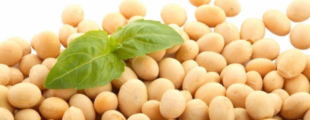 The_Wondrous_Benefits_of_Soy_Protein